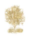 Olive Tree Golden White Posters par Amy Brinkman