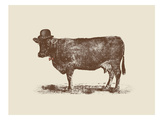 Cow Cow Nut Posters af Florent Bodart