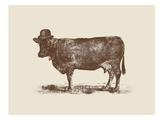 Cow Cow Nut Poster di Florent Bodart