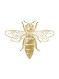Bumblebee Golden White Posters par Amy Brinkman