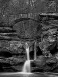 Rhynoodle Lámina fotográfica por Jim Crotty