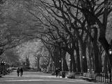Central Park, New York City, Ny, USA Impressão em tela esticada por Walter Bibikow