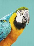 Tropical Parrot Láminas por  LILA X LOLA