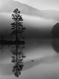 Scots Pine Tree Reflected in Lake at Dawn, Loch an Eilean, Scotland, UK Fotografie-Druck von Pete Cairns