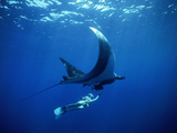 Diver Swims with Giant Manta Ray, Mexico Metalldrucke von Jeffrey Rotman