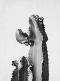 Cactus On Grey 2 Juliste tekijänä  LILA X LOLA
