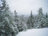 Snow-Covered Evergreens in a Winter Landscape Metal Print by Bill Curtsinger