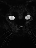 Black Domestic Cat, Eyes with Pupils Closed in Bright Light Photographic Print by Jane Burton