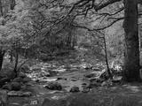 Afon Artro Passing Through Natural Oak Wood, Llanbedr, Gwynedd, Wales, United Kingdom, Europe Fotografisk tryk af Pearl Bucknall