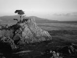 Lone Cypress Tree on Rocky Outcrop at Dusk, Carmel, California, USA Fotografie-Druck von Howell Michael
