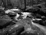 Golitha Falls, Bodmin, Cornwall, UK Fotografisk tryk af Ross Hoddinott