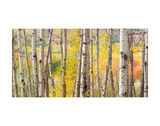 Autumn Woods, Acadia Art by Michael Hudson