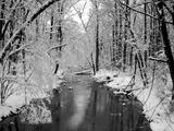 Snow Covered Trees along Creek in Winter Landscape Fotografisk tryk af Jan Lakey