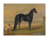 America's Renowned Stallions, c. 1876 I Posters av  Vintage Reproduction
