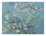 Almond Blossom, 1890 Plakater af Vincent van Gogh