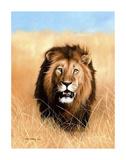 African Savannah Lion Stampe di Sarah Stribbling