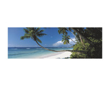 Anse Severe, Seychelles Posters af David Noton