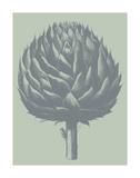 Artichoke 8 Posters par  Botanical Series