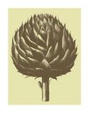 Artichoke 3 Affiches par  Botanical Series