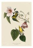 Blue-Winged Yellow Warbler Posters af John James Audubon