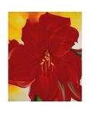 Red Amaryllis, 1937 Posters av Georgia O'Keeffe