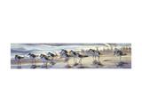 Shoreline Sanderlings Art par Matthew Hillier