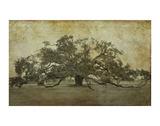 Sugarmill Oak, Louisiana Art by William Guion