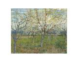 The Pink Orchard, 1888 Affiches par Vincent van Gogh