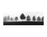 Tree Line Posters af Erin Clark