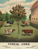 Typical Cows, c. 1904 Poster von  Vintage Reproduction