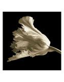 Tulipe Posters par Michael Harrison