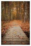 Woodland Path Poster by Michael Hudson
