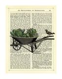 Wheelbarrow Lettuce & Bird Print by Marion Mcconaghie