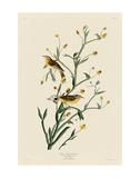Yellow Red-Poll Warbler Posters af John James Audubon