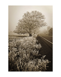 Frosted Oak & Road Affiches par David Lorenz Winston