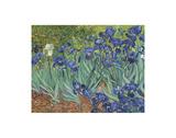 Irises in the Garden Affischer av Vincent van Gogh
