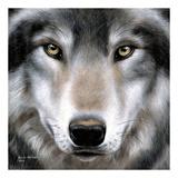 Grey Wolf Portrait Poster di Sarah Stribbling