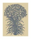 Lilies 1 Affiches par  Botanical Series