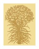 Lilies 19 Posters par  Botanical Series