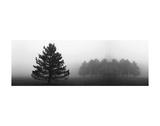 Misty Pines Plakater af Erin Clark