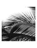Palms 13 (detail) Kunstdrucke von Jamie Kingham