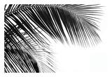Palms 11 Posters by Jamie Kingham