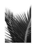 Palms 12 Art by Jamie Kingham