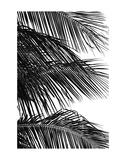 Palms 4 Posters par Jamie Kingham