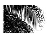 Palms 3 Posters by Jamie Kingham