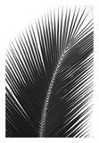 Palms 14 Plakater av Jamie Kingham