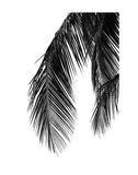 Palms 5 Kunstdruck von Jamie Kingham