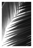Palms 6 Prints by Jamie Kingham