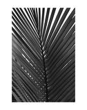Palms 9 Posters by Jamie Kingham