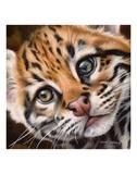 Ocelot Kitten Poster di Sarah Stribbling